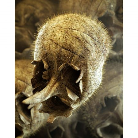 Snapdragon Skull print